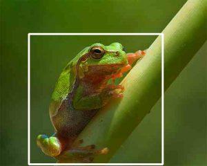تصوير الماكرو Macro   أنواع التصوير شرح بالصور