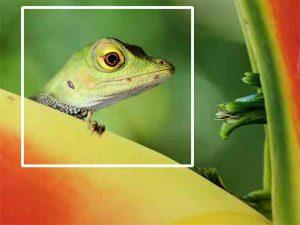 تصوير الماكرو Macro | أنواع التصوير شرح بالصور