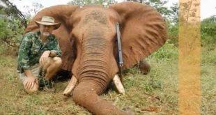 فشل فيل