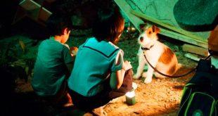 فيلم كيف تسرق كلباً How to steal a dog