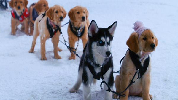 أصدقاء الثلج Snow_Buddies