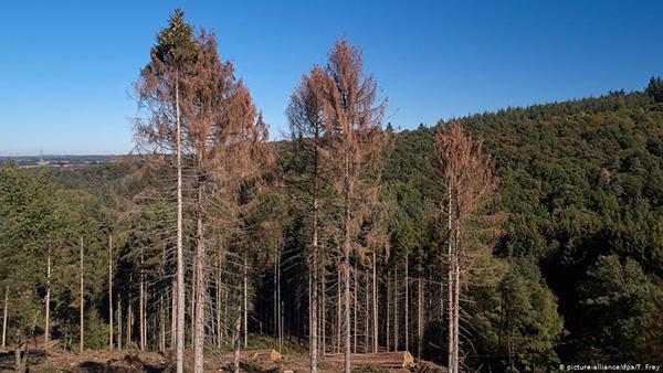 الغابات فى الجفاف