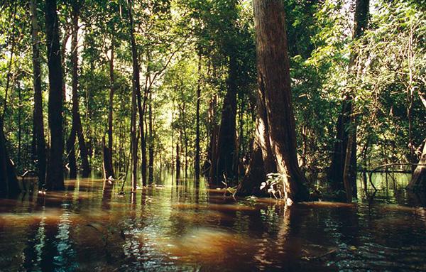 الغابات فى الأمطار