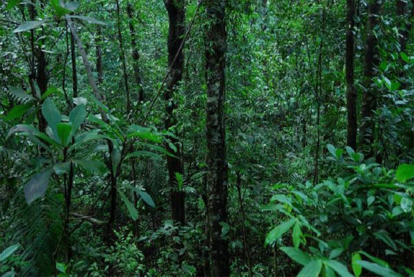 غابات الهند